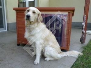 Perdea / Usa PVC Flexibil pentru cusca caini cu sipca de lemn cu suprapunere4