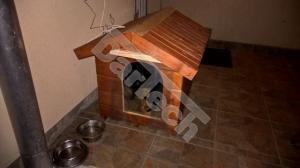 Perdea / Usa PVC Flexibil pentru cusca caini cu sipca de lemn (fara suprapunere)2
