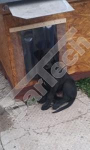 Perdea / Usa PVC Flexibil pentru cusca caini cu sipca de lemn (fara suprapunere)0