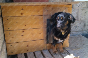 Perdea / Usa PVC Flexibil pentru cusca caini (fara suprapunere si fara sipca)8