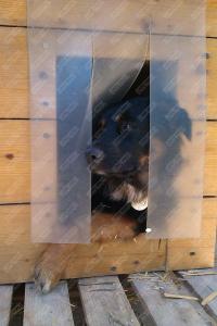 Perdea / Usa PVC Flexibil pentru cusca caini (fara suprapunere si fara sipca)6