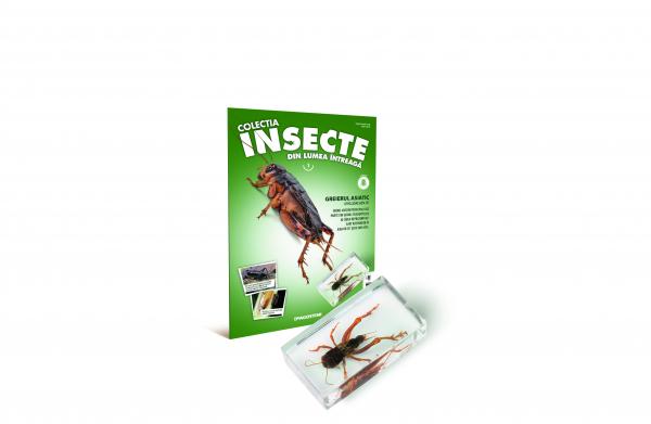 Colecţia Insecte din lumea ȋntreagă - Nr. 01: Greierul Asiatic 0