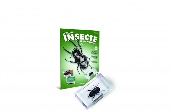 Colecţia Insecte din lumea ȋntreagă - Nr. 04: Rădaşca fantomă 0
