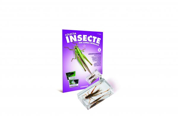 Colecţia Insecte din lumea ȋntreagă - Nr. 05: Lăcusta exotică 0