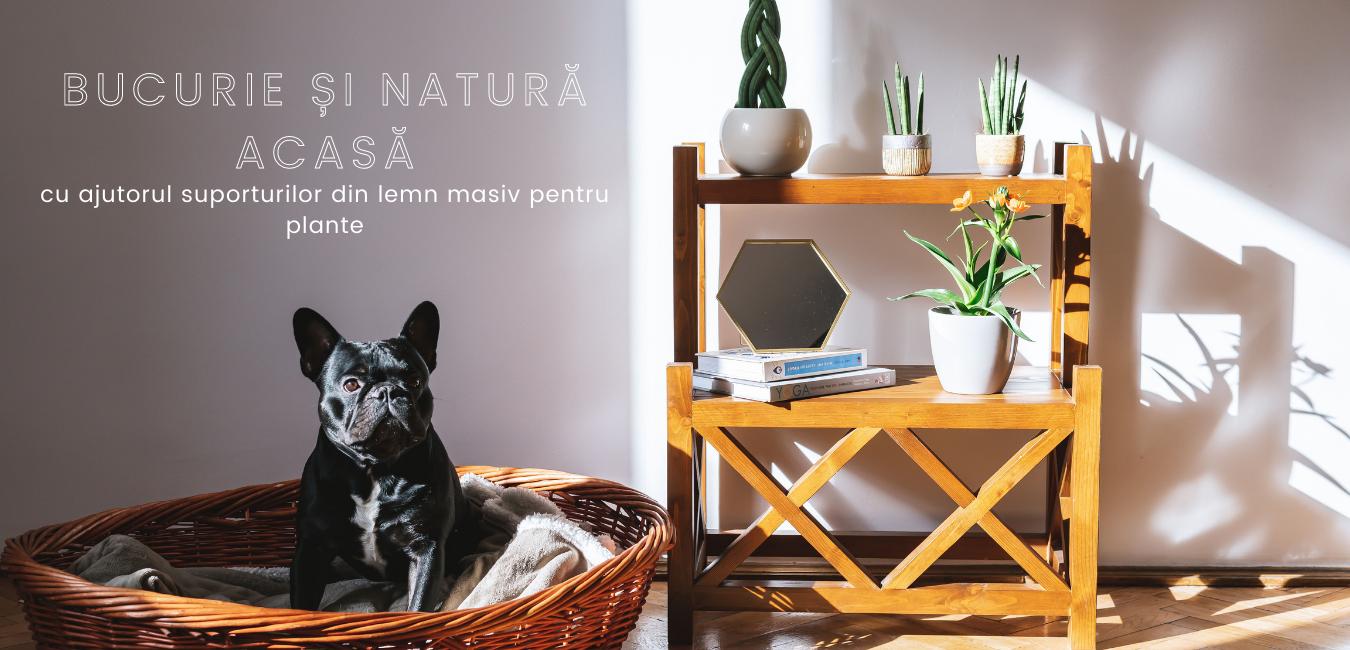 Bucurie și natură acasă cu ajutorul suporturilor din lemn masiv pentru plante