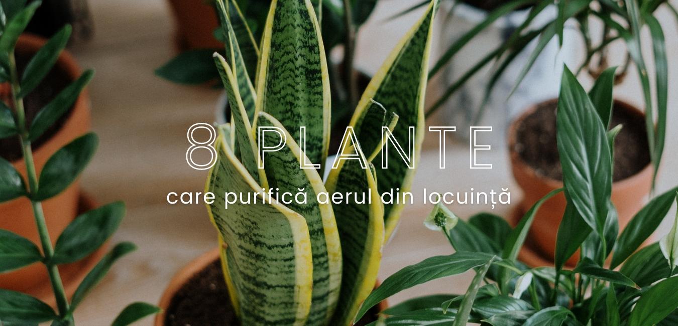 8 plante care purifică aerul din locuință