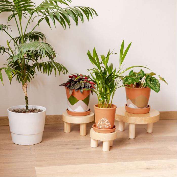 Set 3 suporturi pentru plante, lemn masiv de pin [2]
