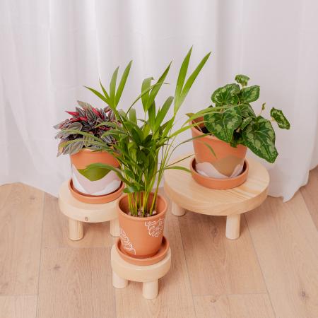 Set 3 suporturi pentru plante, lemn masiv de pin [1]