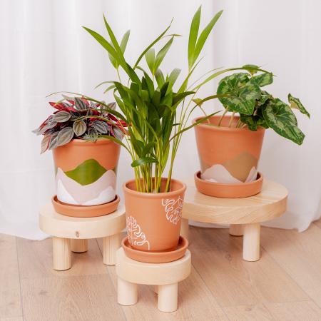 Set 3 suporturi pentru plante, lemn masiv de pin [0]