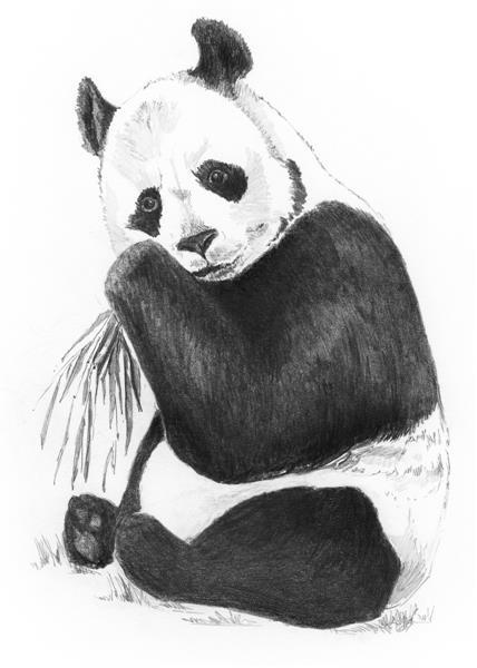 Mini-set schita grafica, Panda [0]