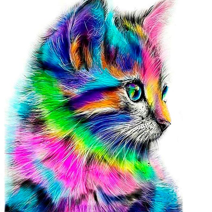 Pictura pe numere, cu sasiu, Colourful Kitten [0]