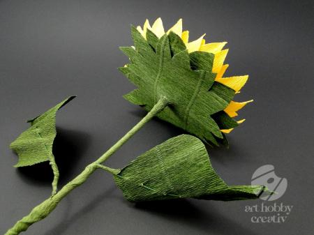 Floarea soarelui [2]