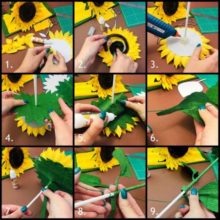 Floarea soarelui [3]