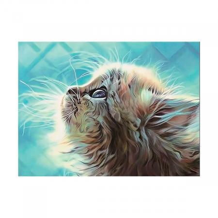 Set pictura pe numere, cu sasiu, Kitten in a Dream, 40x50 cm0