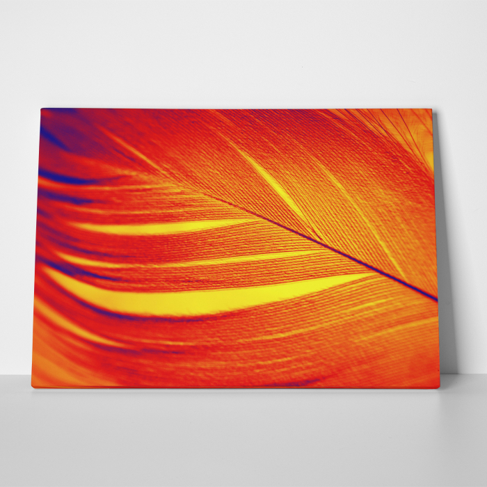 Tablou canvas abstract, Pana rosie 2