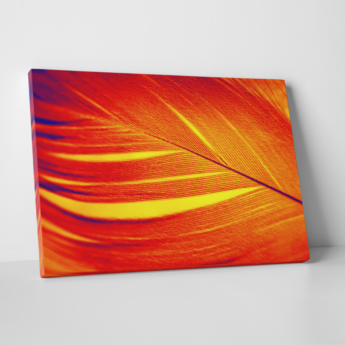 Tablou canvas abstract, Pana rosie 0