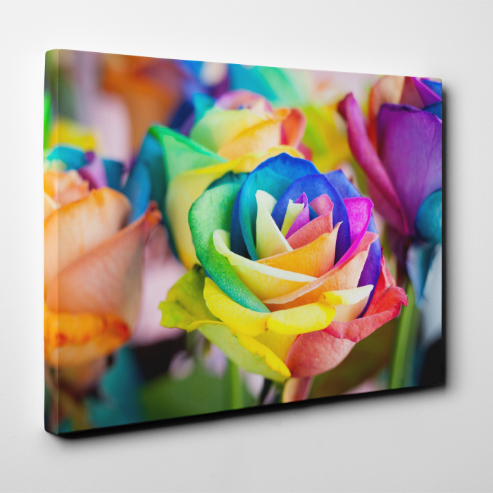 Tablou canvas floral, Rainbow Roses 3
