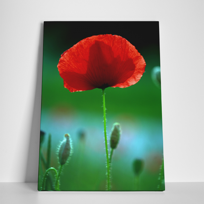 Tablou canvas floral, Red Spot 3