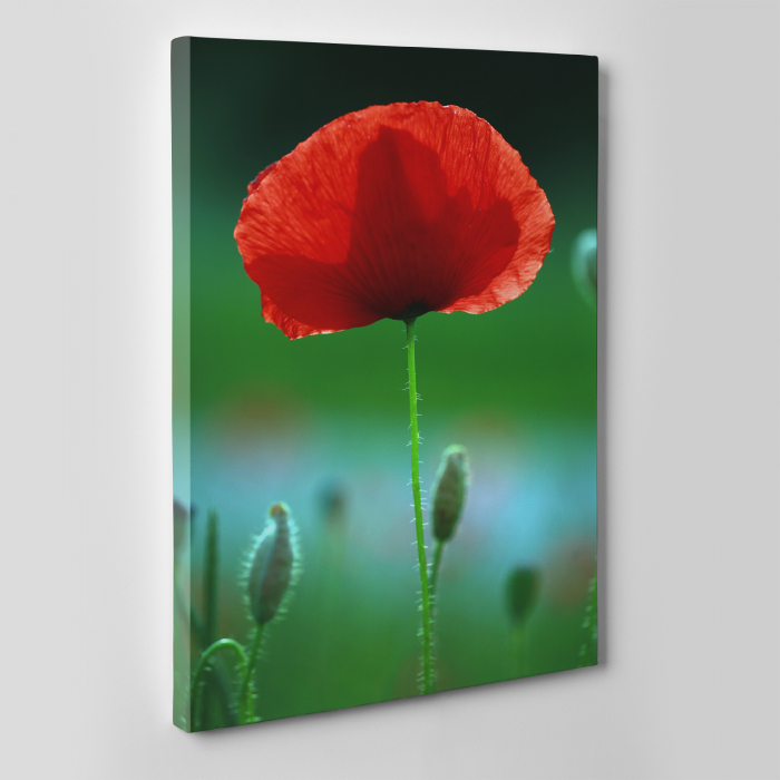 Tablou canvas floral, Red Spot 4