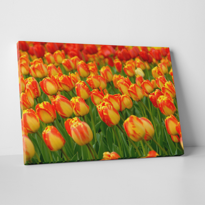 Tablou canvas floral, Red Tulips 0