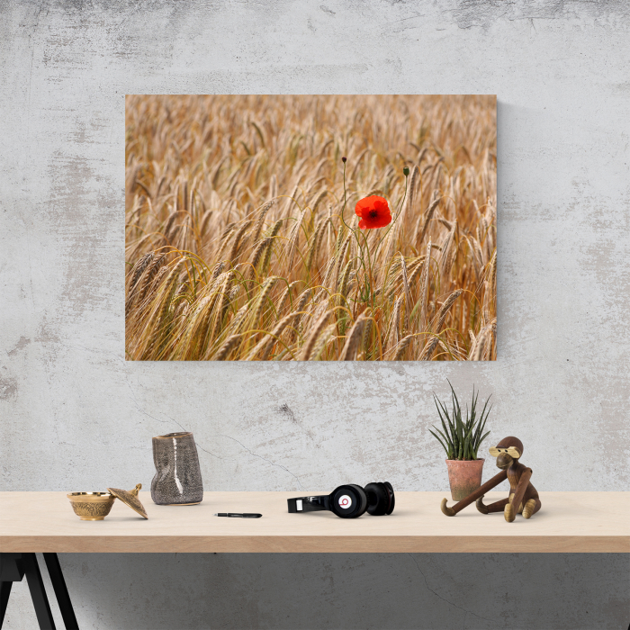 Tablou canvas floral, Single Red 1