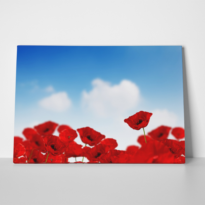Tablou canvas floral, Sky and Poppies 1