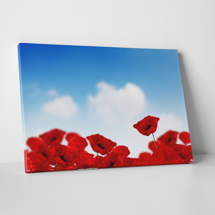 Tablou canvas floral, Sky and Poppies 0