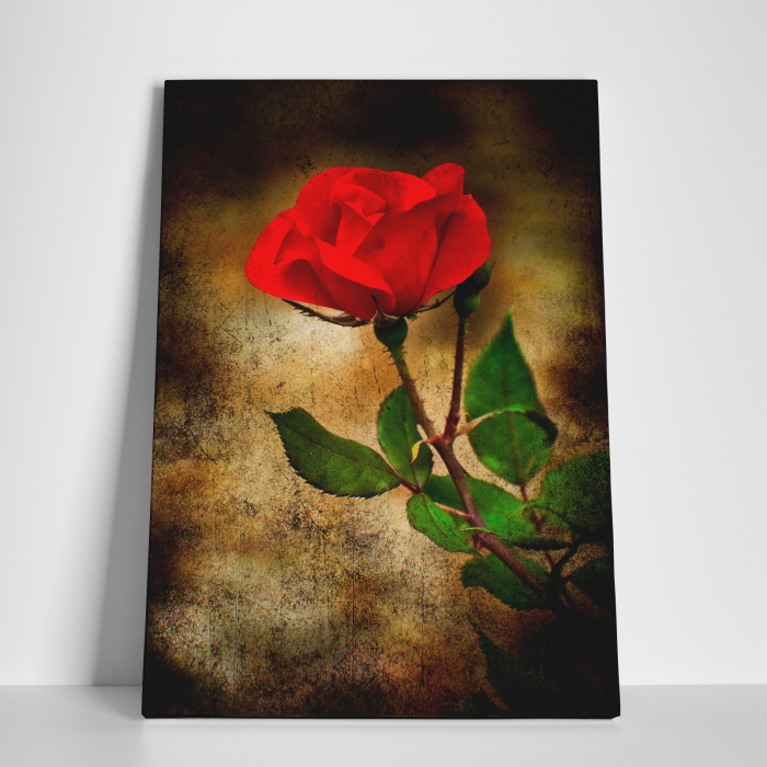 Tablou canvas floral, Vintage Rose 3