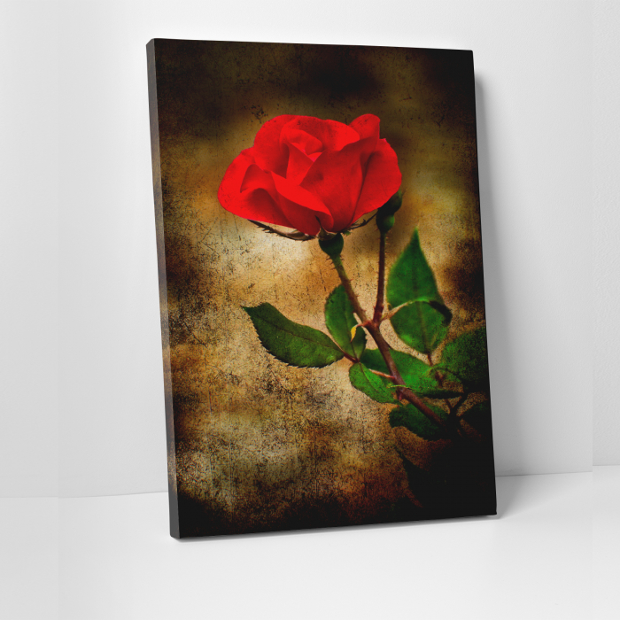 Tablou canvas floral, Vintage Rose 0