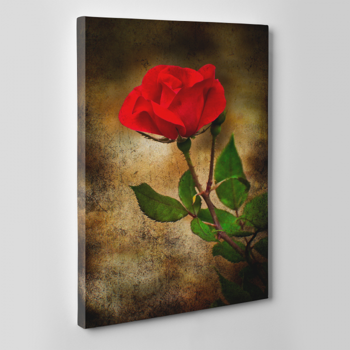 Tablou canvas floral, Vintage Rose 4