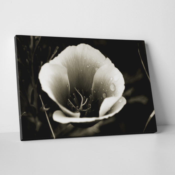 Tablou canvas floral, Water Drops on Flower 0