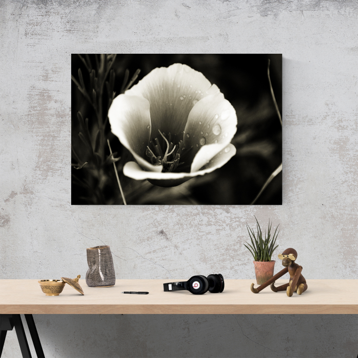 Tablou canvas floral, Water Drops on Flower 3