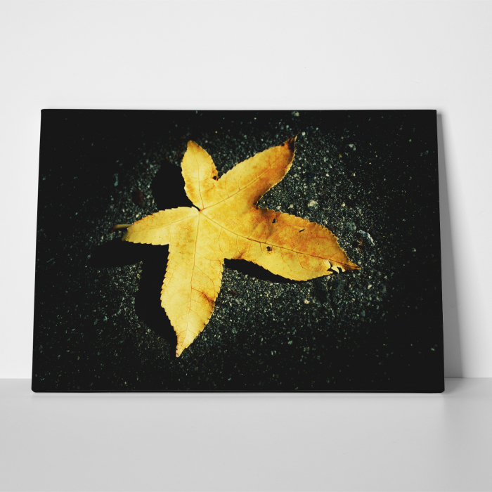 Tablou canvas floral, Yellow Leaf on Black 2