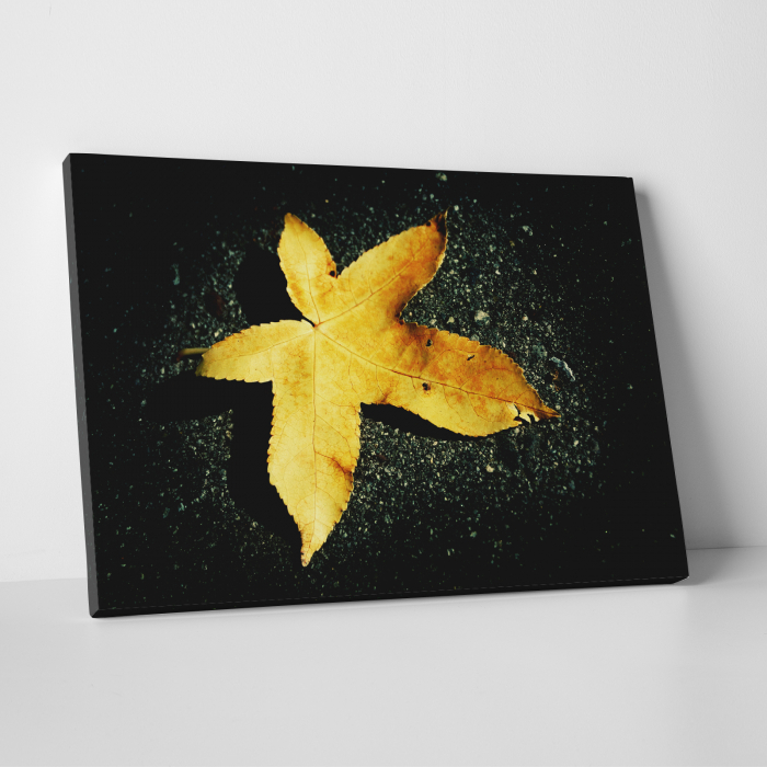 Tablou canvas floral, Yellow Leaf on Black 0