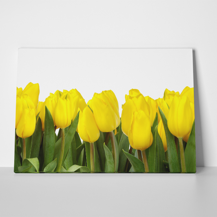 Tablou canvas floral, Yellow Tulips 2