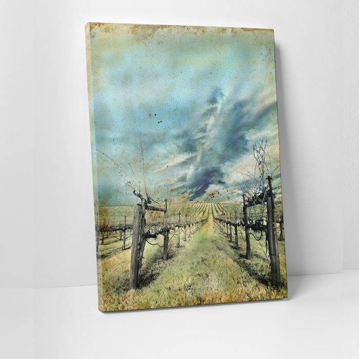 Tablou canvas natura, Wineyard 0