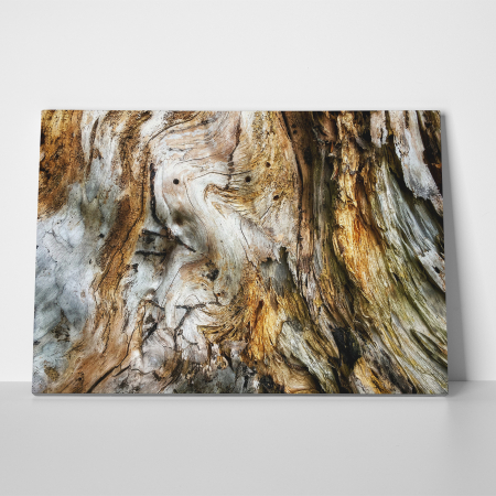 Tablou canvas abstract, Trunchi de copac putrezit2