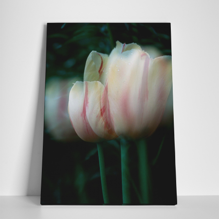 Tablou canvas floral, Blurred Tulip2