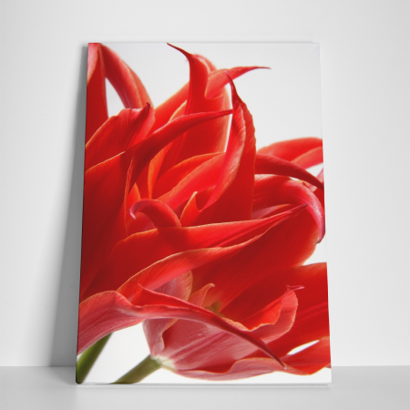 Tablou canvas floral, Red Tulips2