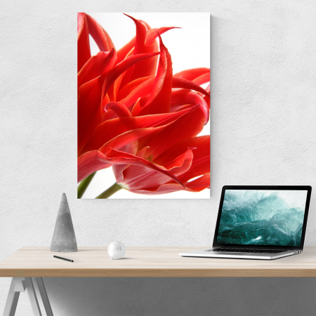 Tablou canvas floral, Red Tulips1