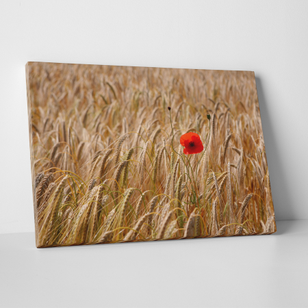 Tablou canvas floral, Single Red0