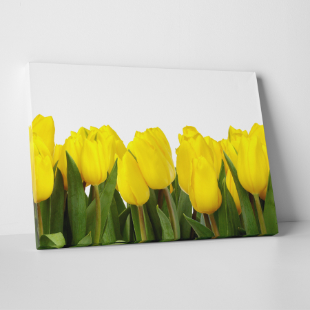 Tablou canvas floral, Yellow Tulips0