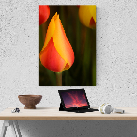 Tablou canvas floral, Young Tulip1