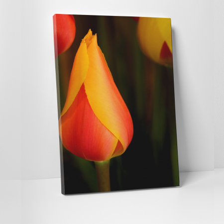 Tablou canvas floral, Young Tulip0