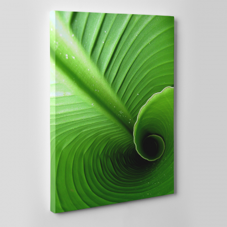 Tablou canvas natura, Swirl Leaf1
