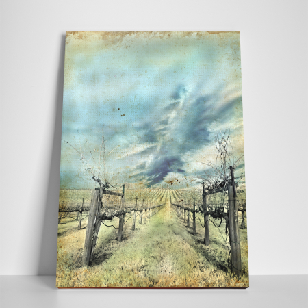 Tablou canvas natura, Wineyard2