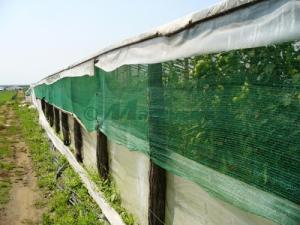 Plasa verde umbrire, 1.7 latime x 100 ml lungime, grad de Umbrire 70 % [0]