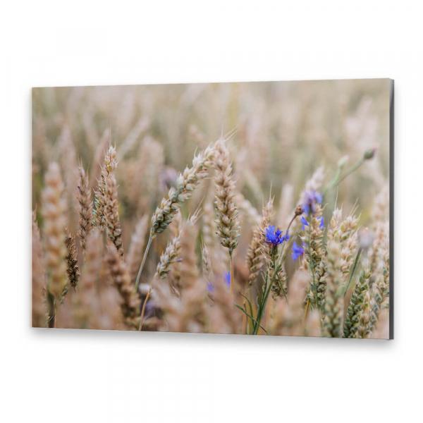 Tablou simplu - Albastru în lanul de grâu [0]