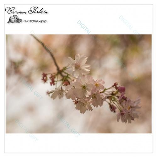 Tablou simplu - Iz de primăvară 1