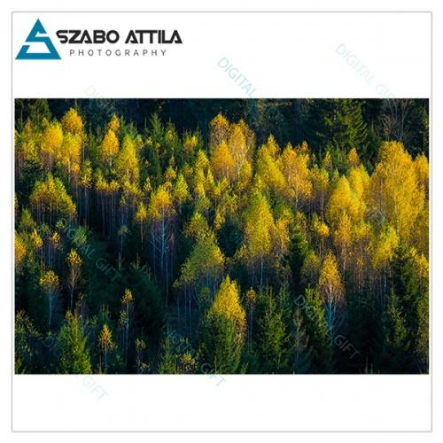 Tapet - Peste pădure 1
